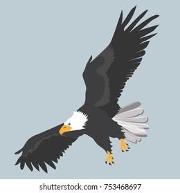 Bald eagle - bird