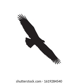 bald eagle flying in the sky silhouette