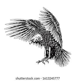 Bald eagle flying swoop line art draw black color on white background illustration. for t shirt, mug, tottebag, hoodie