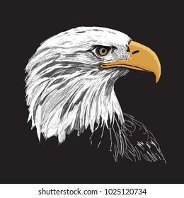 Bald eagle hand drawn vector illustration on black background, mascot graphic.