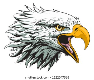 Bald eagle head vector illustration