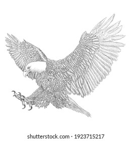 Bald eagle swoop attack winged hand draw sketch black line doodle monochrome on white background vector.