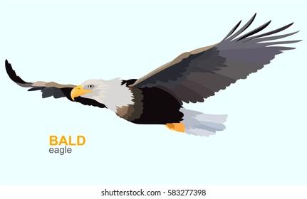Bald eagle. Vector illustration.