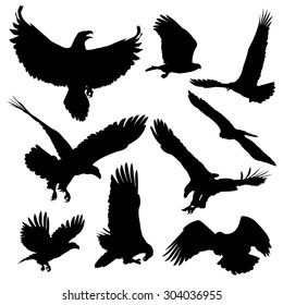 Bald eagles silhouettes isolated on white background. Vector illustration.