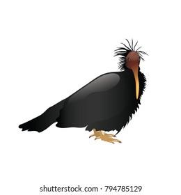 bald ibis vector