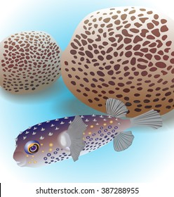 Balloonfish and corals favia. Vector illustration