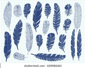 Ballpoint pen drawing bird feathers big set on notebook background. Bird feather drawing sketch, plume elegance, sketching illustration