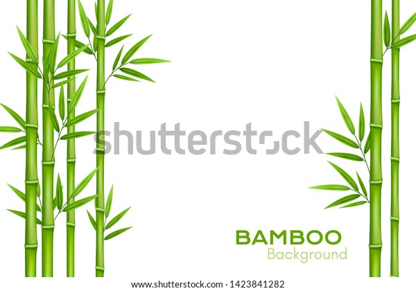 Bamboo background with place for text. Realistic vector illustration with green bamboo stems with leaves.