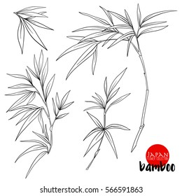 bamboo branch. Stock line vector illustration botanic flowers. Outline drawing.