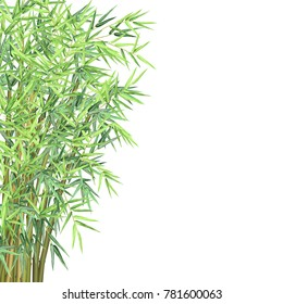 Bamboo with copyspace. Realistic vector illustration on white background for card, banner and poster design.