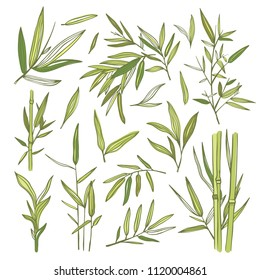 Bamboo green leaves and branches illustrations. Asian bamboo natural botany set