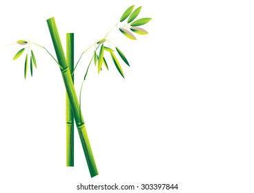 Bamboo. ,green bamboo on white background Vector illustration