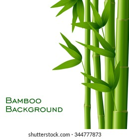 Bamboo isolated on white background, vector