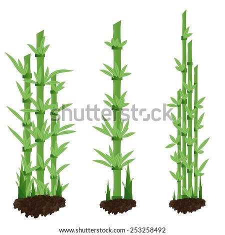 Bamboo Shoot Stock Vector Royalty Free 253258492 Shutterstock