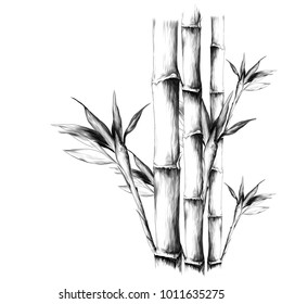 bamboo, sketch vector graphic monochrome pattern