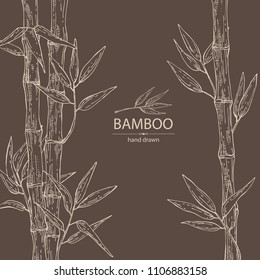 Bamboo: bamboo stalk and leaves. Vector hand drawn illustration.