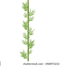 Bamboo stem with leaves on a white background.