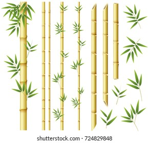 Bamboo stems and leaves on white background illustration
