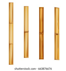 Bamboo stems Realistic brown sticks. Vector Illustration.