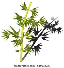 Bamboo tree tropical with shadow china japan  Vector illustration