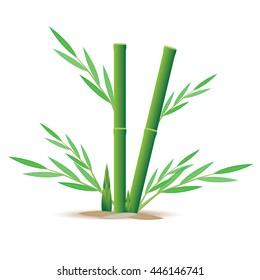 bamboo vector design
