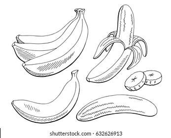 Banana fruit graphic black white isolated sketch illustration vector