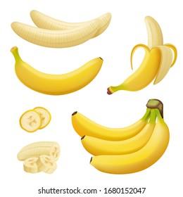 Banana fruits. Exotic desserts natural tropical plants vector healthy food bananas