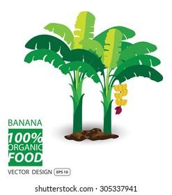 Banana, fruits vector illustration.