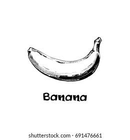 Banana, graphic hand drawn illustration. Line icon bananas. Vector illustration.