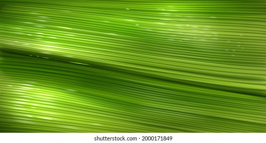 Banana leaf texture, close up green pattern of palm tree foliage with water drops. Vector realistic background with structure of fresh leaf surface. Wallpaper with tropical plant texture
