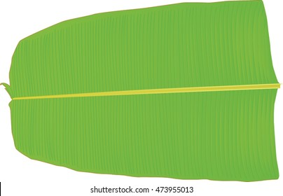 Banana Leaf used to serve Sadya