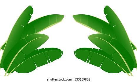 Banana leaf vector isolated on white background.