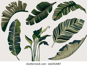 banana leaf vector set.