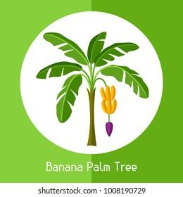 Banana palm tree. Illustration of exotic tropical plant.