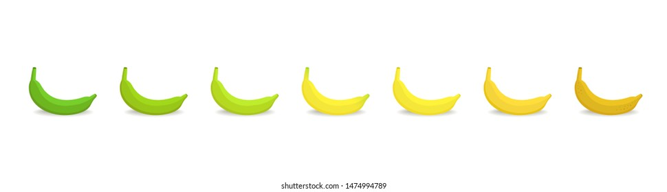 Banana ripeness stages chart. Colour gradation set plant. Ripening plantains. Musa paradisiaca. From green to yellow and brown. Animation period progression.