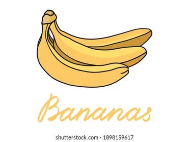 Banana set. Hand drawn bunch of bananas. Vector illustrations.