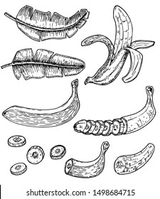 Banana set vector drawing. Isolated hand drawn bunch, peel banana and sliced pieces. Fruit engraved style illustration. Detailed vegetarian food. Great for label, poster, print.