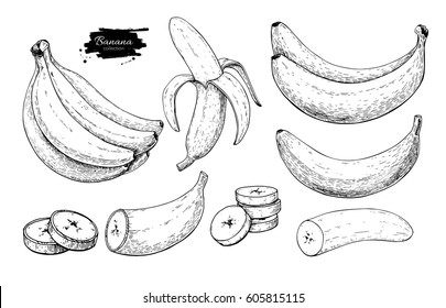 Banana set vector drawing. Isolated hand drawn bunch, peel banana and sliced pieces.  Summer fruit engraved style illustration. Detailed vegetarian food. Great for label, poster, print