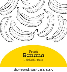 Banana sketch hand drawn illustration. Brochure illustration. Colorful design. Banana frame template. Can used for package
