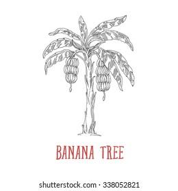 banana tree, banana,tree isolated on a white background