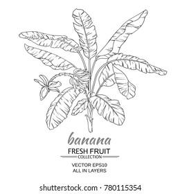 banana  tree vector illustration on white background