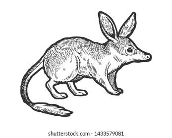 Bandicoot animal sketch engraving vector illustration. Scratch board style imitation. Hand drawn image.