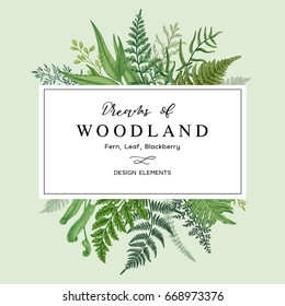 Banner with herbs, leaves and ferns. Frame with a leafy bouquet.  Floral design elements. Vector illustration. Vintage style.