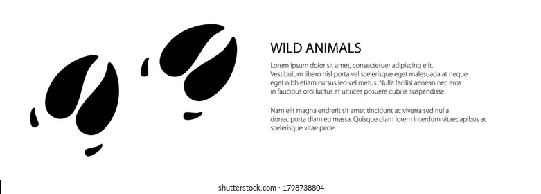 Banner of track of forest animal, trace of a predatory animal boar, vector illustration