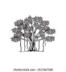 Banyan tree vector art, Hand drawn ancient tree illustrations