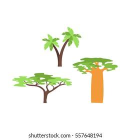Baobab tree isolated on white vector illustration.