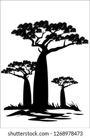 baobab tree on vector illustration