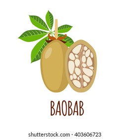 Baobab vector logo  in flat style. Isolated object. Superfood baobab fruit icon. Vector illustration.