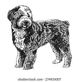 Barbet French water dog. Hand drawn. Vector illustration