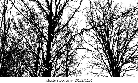 Bare branches of a winter tree. Vector